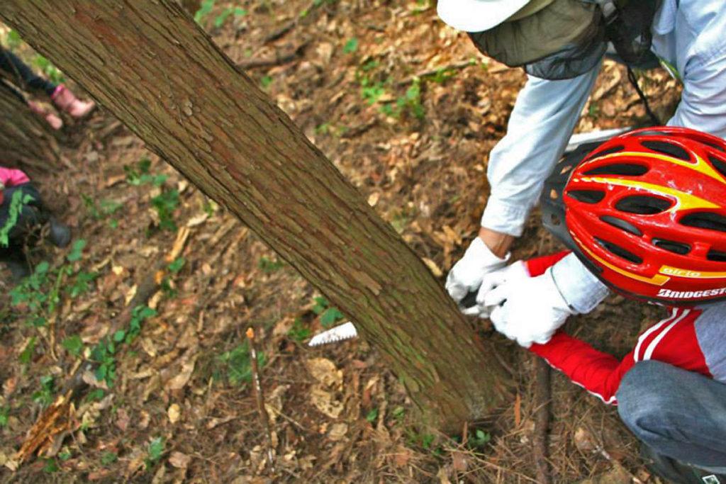 木を切ることも大切な作業